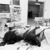 Ảnh 8 của Bệnh viện Quân y 105