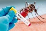 Thời gian ủ bệnh sốt xuất huyết
