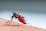 Bệnh sốt xuất huyết lây truyền như thế nào?