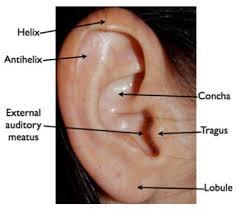 Ảnh 3 của Malignant otitis externa