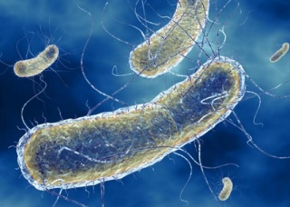 Ảnh 3 của Nhiễm khuẩn E.coli
