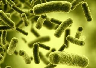 Ảnh 1 của Ngộ độc Botulism