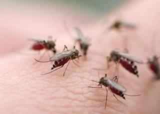 Ảnh 3 của Sốt Dengue