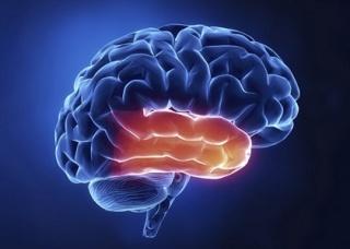 Ảnh 1 của Temporal Lobe Epilepsy