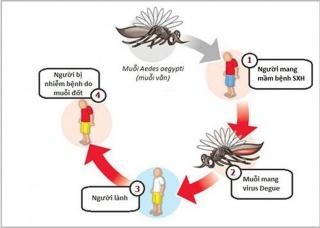 Ảnh 1 của Sốt Dengue