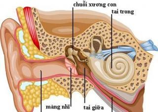 Ảnh 2 của Viêm dây thần kinh tiền đình
