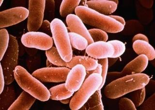 Ảnh 1 của Nhiễm khuẩn Listeria monocytogenes