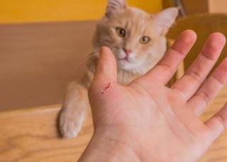 Ảnh 2 của Nhiễm trùng do mèo cào