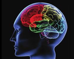 Ảnh 1 của Rối loạn não bộ và hệ thần kinh