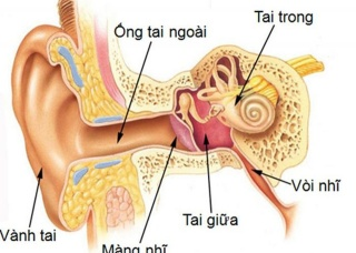Ảnh 1 của Viêm tai ngoài