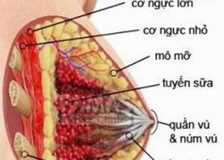 Ảnh 1 của Viêm tuyến vú