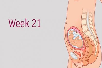 Sự phát triển của thai nhi tuần 21 mẹ bầu cần biết