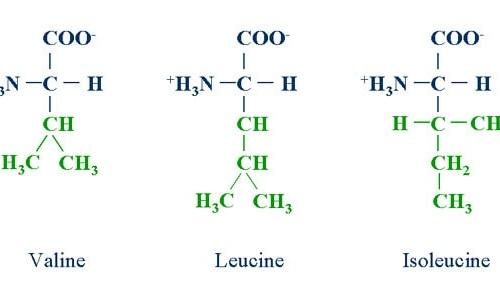Ảnh của Các axit amin phân nhánh