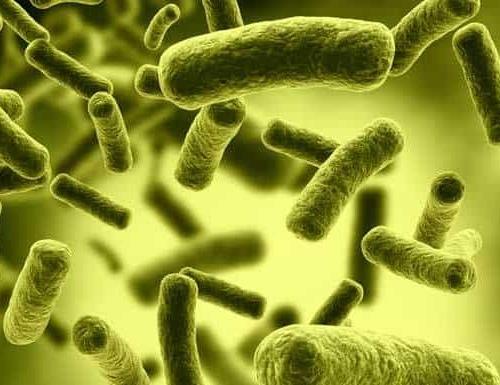 Ảnh của Bifidobacteria