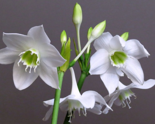 Ảnh của Ngọc trâm hoa