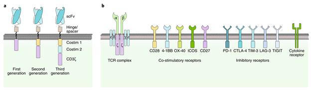 Liệu pháp tế bào CAR-T trong điều trị ung thư - ảnh 1