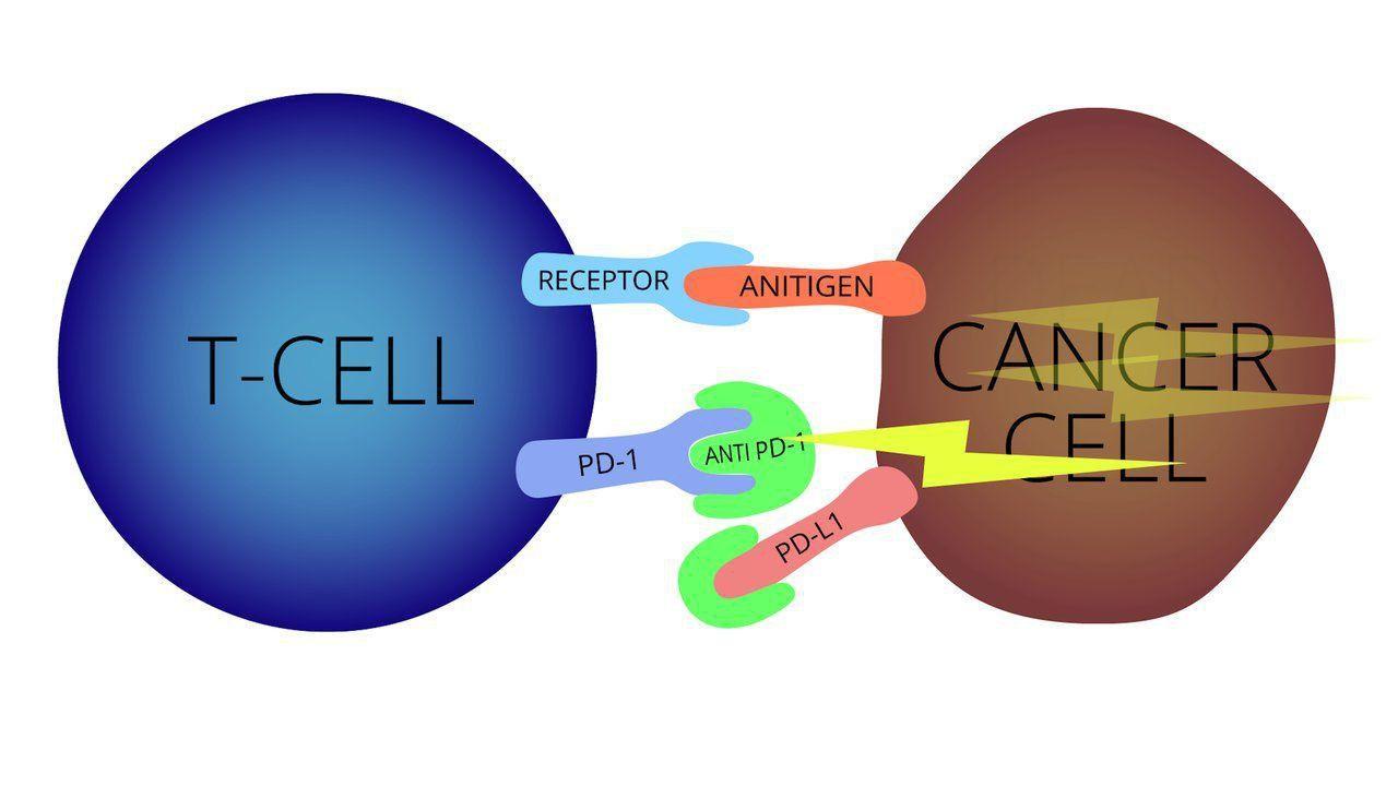 Hệ thống miễn dịch tác động tới tế bào ung thư như thế nào? - ảnh 1