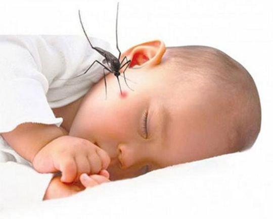 Vắc-xin viêm não Nhật Bản tiêm ở tay hay chân? - ảnh 1