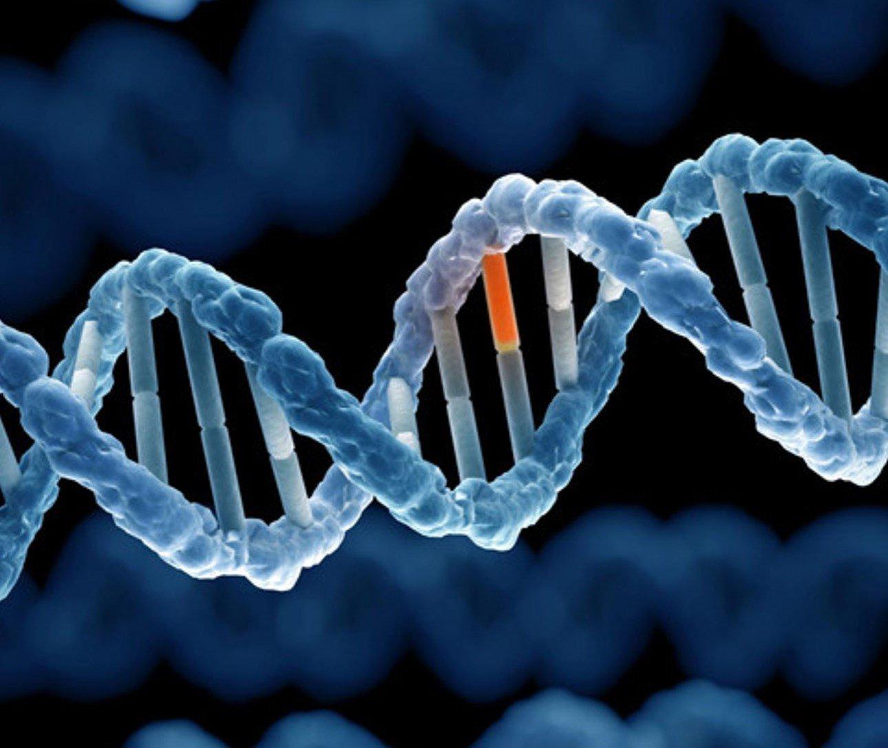 Ý nghĩa xét nghiệm PAPP-A và free beta HCG (Double test)trong sàng lọc dị tật - ảnh 1