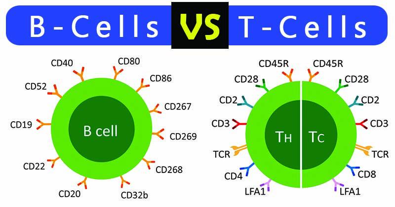 Cơ chế hoạt động của hệ miễn dịch như thế nào? - ảnh 1