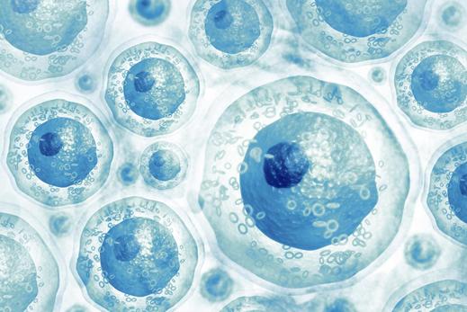 Tế bào gốc là gì và vai trò của tế bào gốc? - ảnh 1