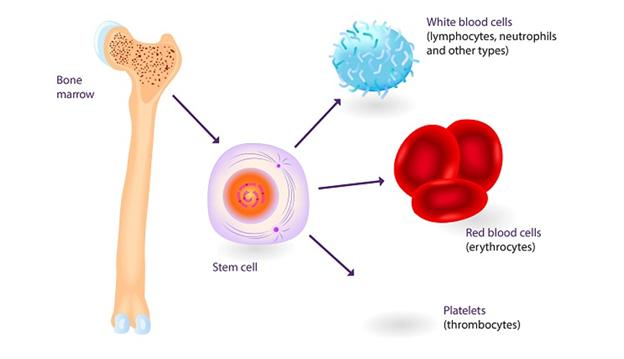 Ghép tế bào gốc giúp Điều trị ung thư ? - ảnh 1