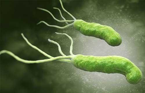 Các con đường lây nhiễm của vi khuẩn HP - ảnh 1