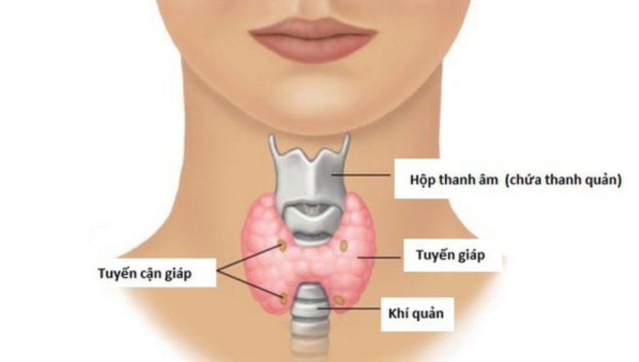 Tìm hiểu về bệnh lý cường tuyến cận giáp - ảnh 1