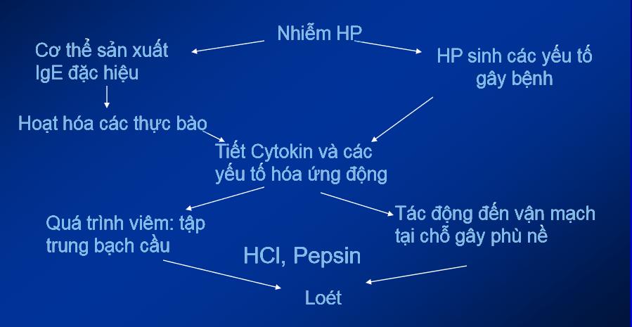 Định nghĩa và cơ chế bệnh sinh của viêm - loét dạ dày tá tràng - ảnh 3