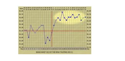 Nhận biết thời điểm thụ thai (Fertility awareness methods) - ảnh 5