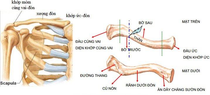 Quy trình chụp cắt lớp vi tính xương chi không tiêm thuốc cản quang - ảnh 1