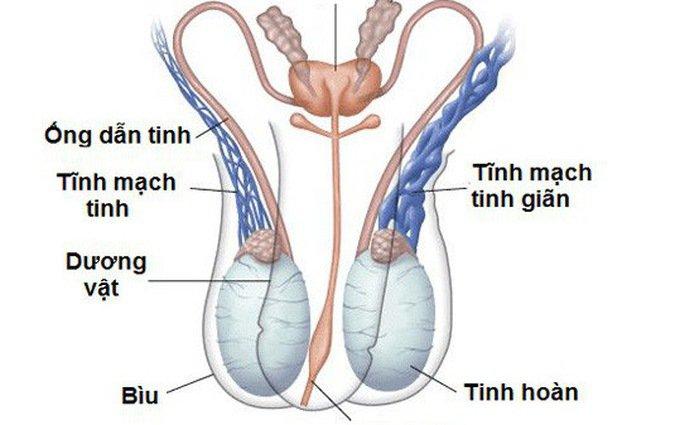 Siêu âm Doppler trong phẫu thuật thắt tĩnh mạch thừng tinh - ảnh 1